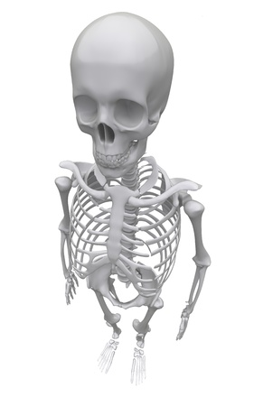 Skeleton on a white background. 3d rendered illustration illustration