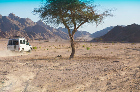 sinai: 4x4 off-road safari. Egypt. All-terrain vehicle racing Sinai desert