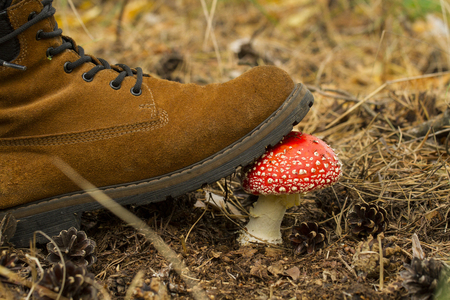The leg is pressed by the fly agaric in the forest