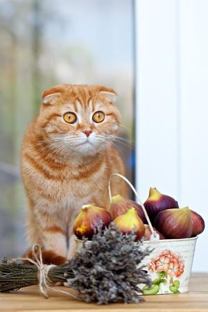 purple fig: cat