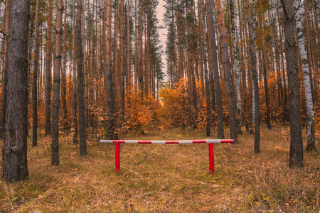 barrier: Barrier in autumn yellow forest