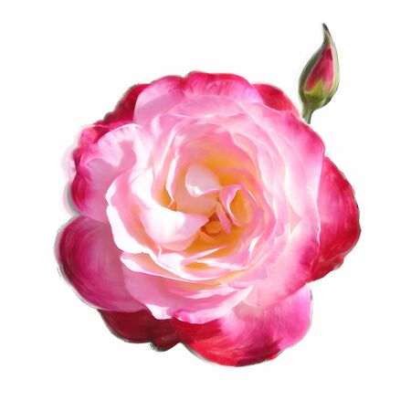pink rose for love