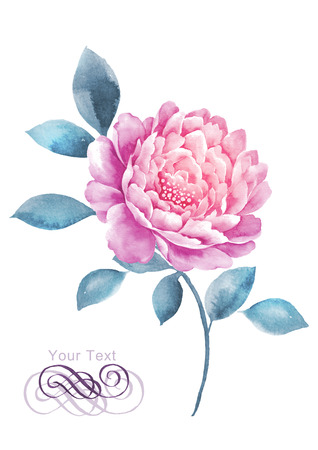 painterly: watercolor illustration flower in simple white background