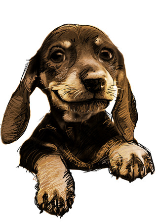 brown haired: Sketch dog in simple background