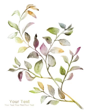 flores secas: flores ilustración acuarela en fondo simple