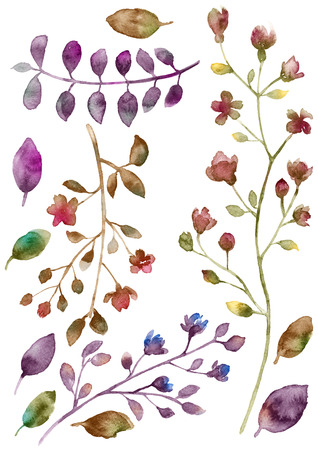 Watercolor flowers set. Hand drawn floral elements isolated on white background. Fantasy flowers, leaves and branch collection. Stock Photo