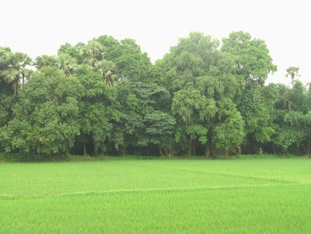 dense forest: Fields with small dense forest