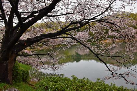 日本の不思議な春