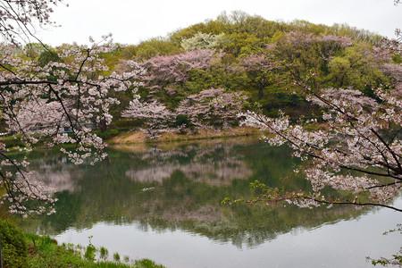 東京の春ワンダーランド 写真素材
