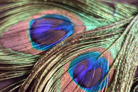 macro: Macro background colorful peacock feather