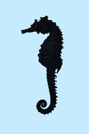 Seahorse isolated cool blue photo