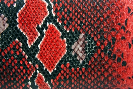 snake skin background close up detail photo