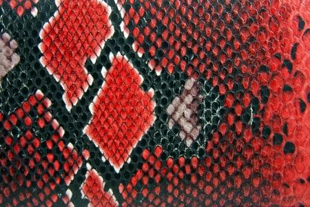 snakeskin: snake skin background close up detail
