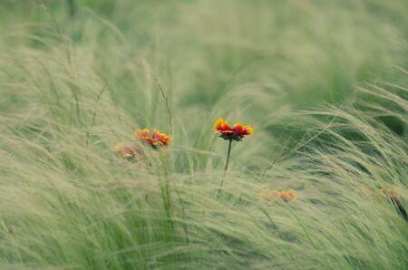 petites fleurs: petites fleurs