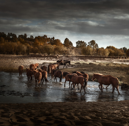 mongolia horse: Inner Mongolia prairie horse