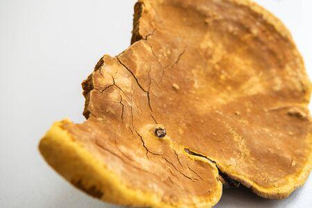 Chinese medicine fungus