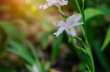 White flowers 版權商用圖片