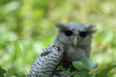 birdwatching: Juvenile Barred Eagle Owl (Bubo Sumatranus) with nature background