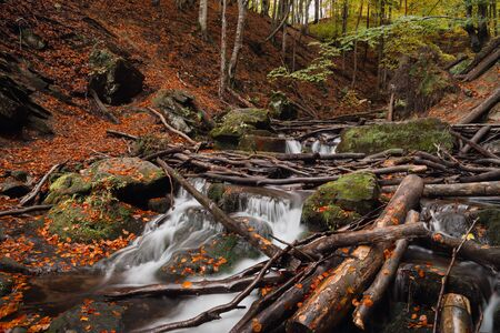 heaped: the influx of a mountain waterfall heaped with broken trees after the storm