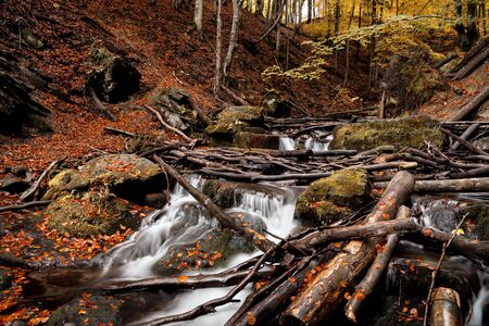 the influx of a mountain waterfall heaped with broken trees after the storm