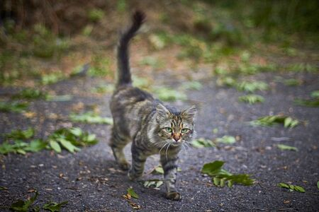 homeless cat with green eyes walks in the autumn park 写真素材