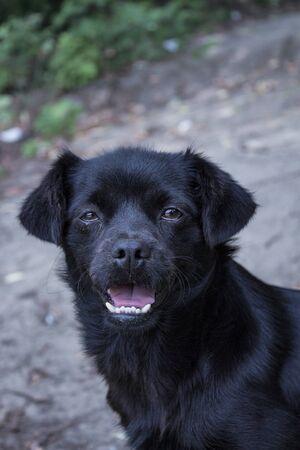 crying dog, black cute dog, doggy portrait, lost animals