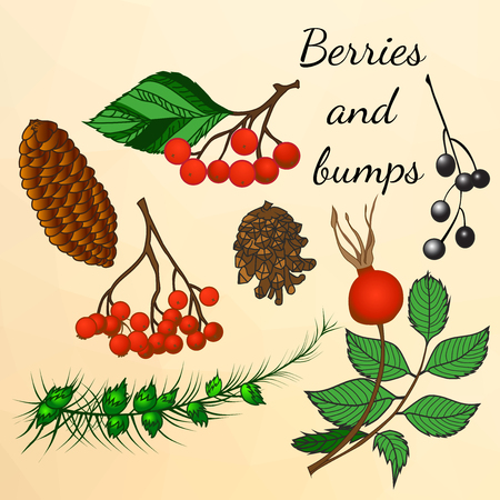 pine cones: Set of forest berries and bumps in autumn style. Watercolor. Leaves, pine cones and berries.