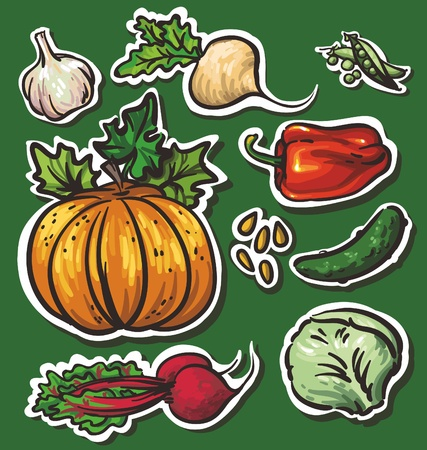 Set of 8 vegetables: garlic, turnips, pumpkins, cucumbers, beets, cabbage, peppers, peas Illustration