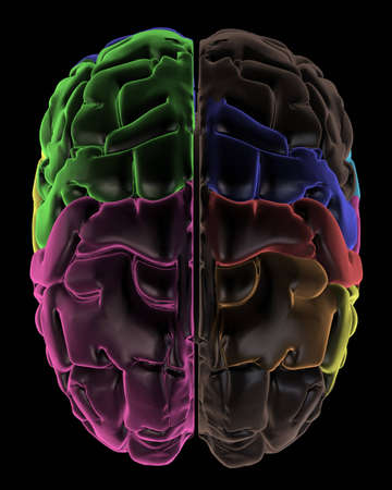 frontal lobe: 3D Render. Coloured areas of the Brain, top view Stock Photo