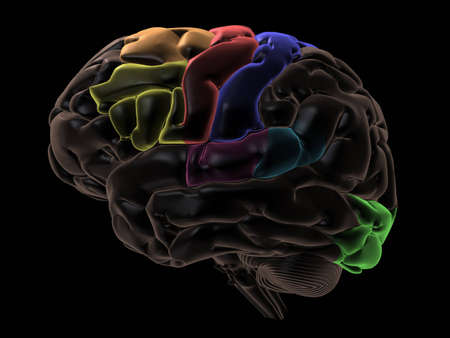 frontal lobe: 3D Render. Coloured areas of the Brain, left-side view