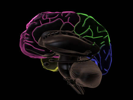 frontal lobe: 3D Render. Coloured areas of the Brain, right-side view without left hemisphere
