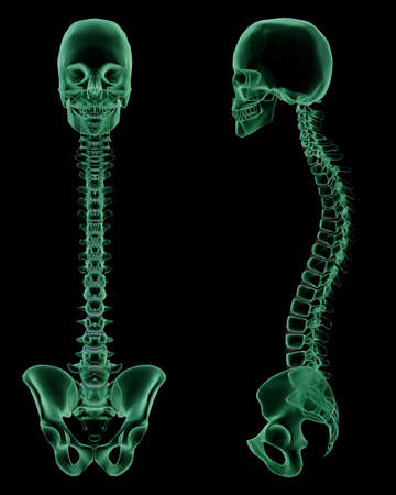 pelvis: 3D render. X-Ray of the Skull, Spine and Pelvis front and side view