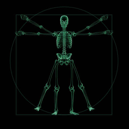 3D render. X-Ray of a Vitruvian skeleton photo