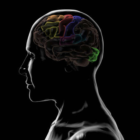 frontal lobe: See-Through Left-Side of the Head and Brain