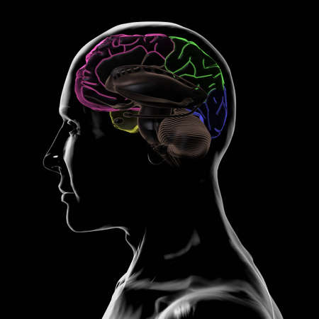 frontal lobe: See-Through Inside Left-Side of the Head and Brain