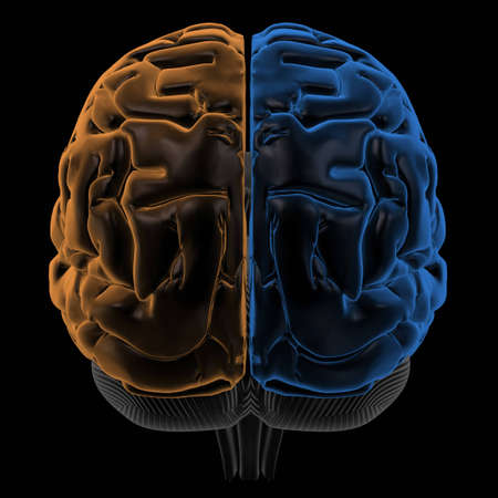 temporal: 3D Rendering  of the two Hemispheres of the brain back view. change hue to generate your own colours