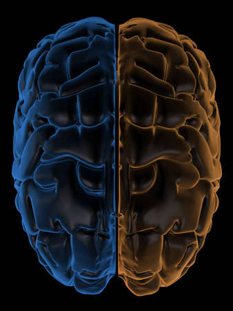 temporal: 3D Rendering  of the two Hemispheres of the brain top view. change hue to generate your own colours