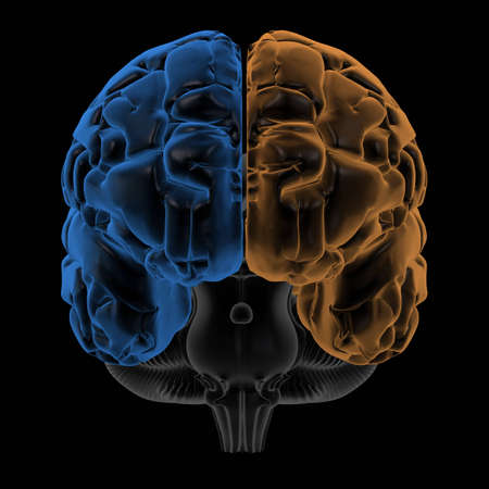 lobe: 3D Rendering  of the two Hemispheres of the brain front view. change hue to generate your own colours