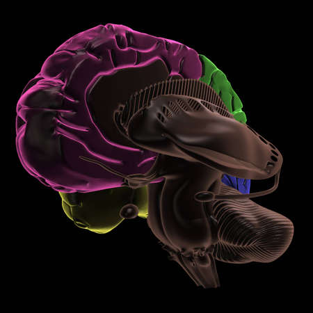 frontal lobe: Coloured areas of the Brain, three-quarter view