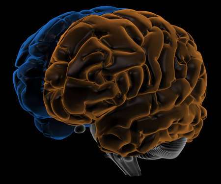 frontal lobe: Hemispheres of the brain three-quarter view