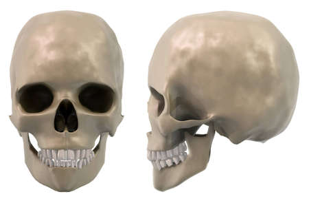 skull front and side Stock Photo - 12741144