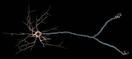 Neuron Close_up photo