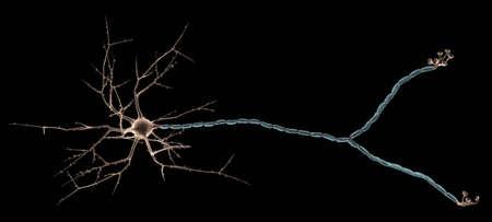 neurone: Neuron Close_up