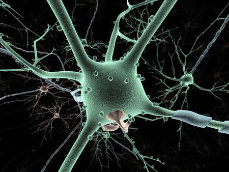 Neuron long-shot Stock Photo - 12741245