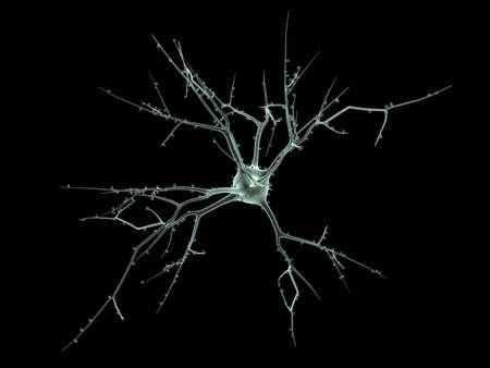 nervios: C�lula del cuerpo de una neurona