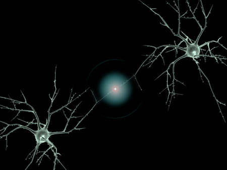 axon: Cell body of two Neurons
