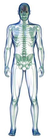 body x-ray front on white photo
