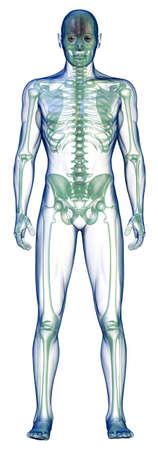 body x-ray vooraan op wit Stockfoto