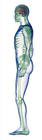 body x-ray side view on white photo