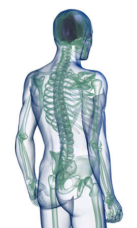 translucent: body x-ray perspective back view on white Stock Photo
